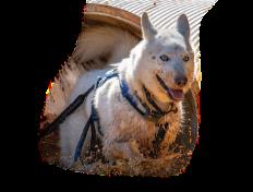 Introducing CTC Dog Gear Ambassadors - 7 of 14