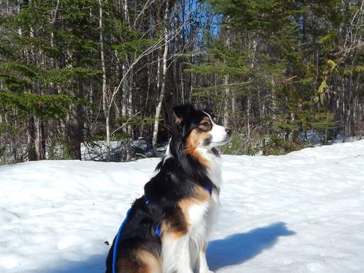 Introducing CTC Dog Gear Ambassadors - 4 of 14