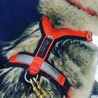 CTC Dog Gear Shoulder Harness –Ripstop
