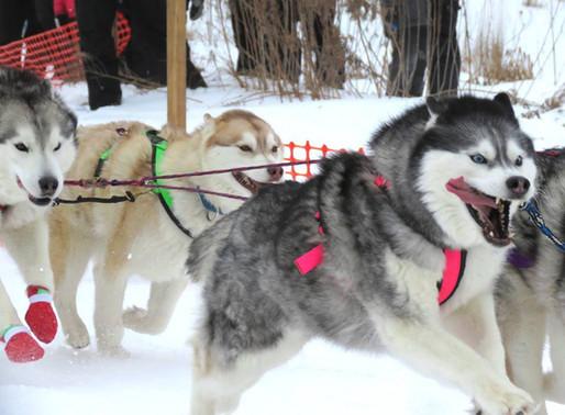 Introducing CTC Dog Gear Ambassadors - 6 of 14