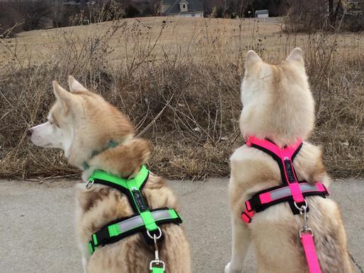 Introducing CTC Dog Gear Ambassadors - 8 of 14