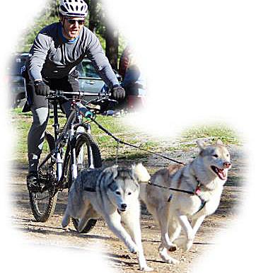 Introducing CTC Dog Gear Ambassadors : 10 of 14