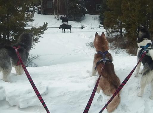 Introducing CTC Dog Gear Ambassadors - 5 of 14