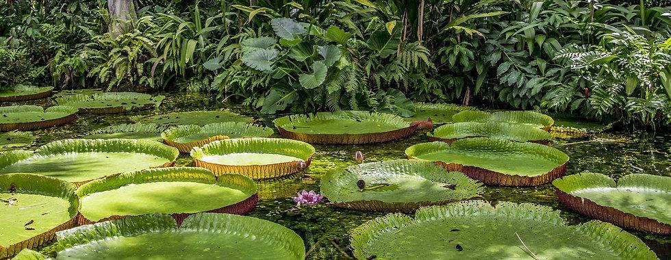 naturaamazon.jpg