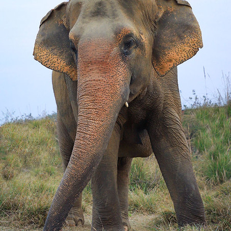 Today is World Elephant Day So Read This