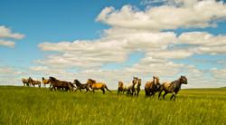 Green Grass (Mongolia)