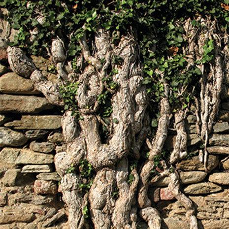 Piemonte Castle Wall