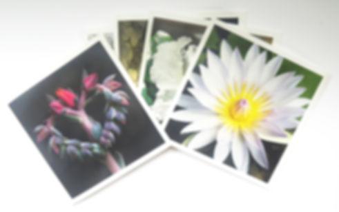 DancingBird Greeting Card Images