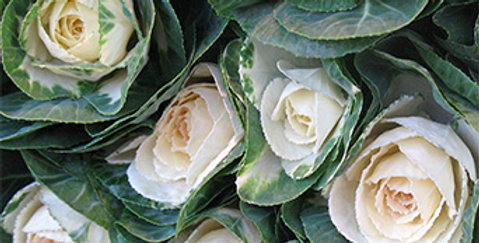 French Market Cabbage Roses