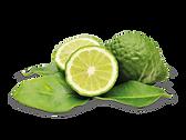 kisspng-thai-cuisine-kaffir-lime-bergamo