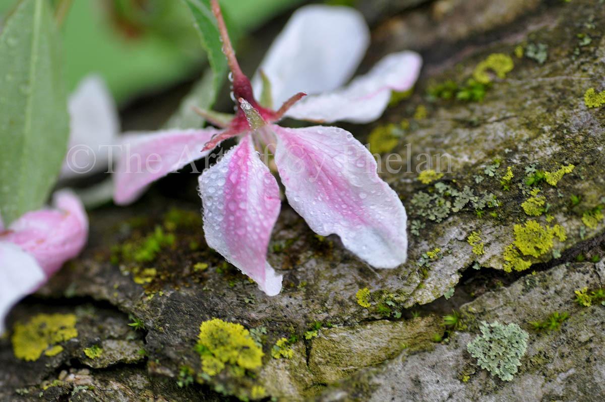 """Spring Flower #3"""