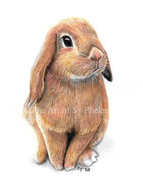 """""""Little Bunny"""""""