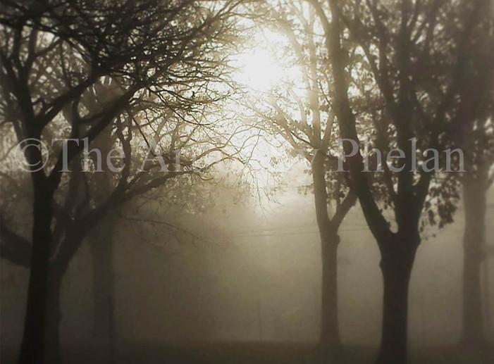 """""""Morning Light"""""""