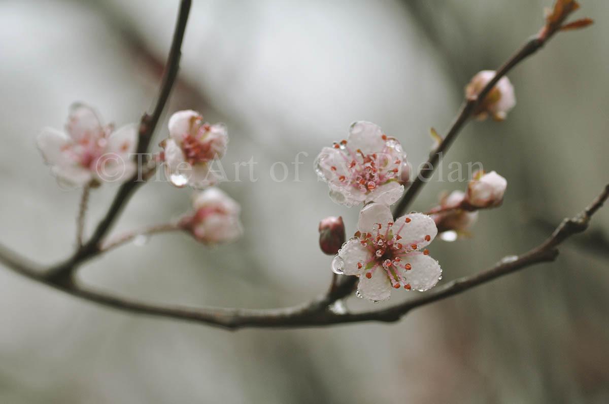 """Spring Flower #1"""