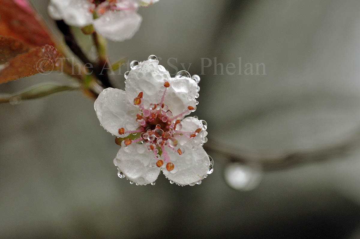 """Spring Flower #4"""