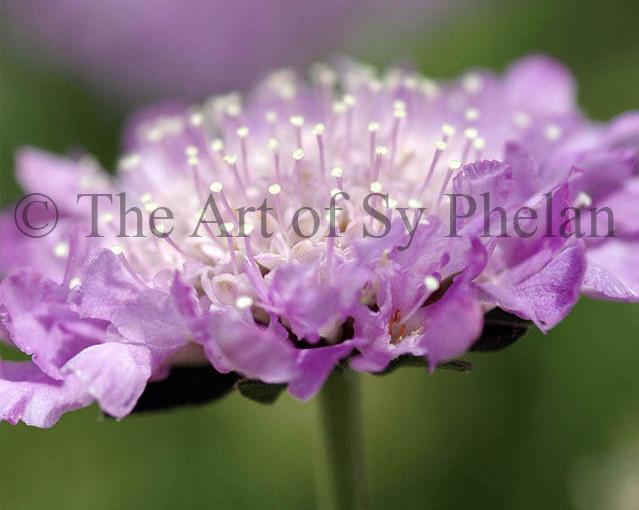 """""""Flower #9242"""""""