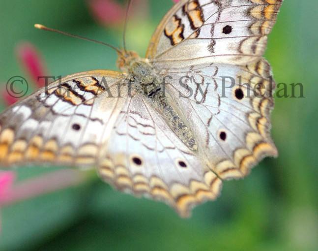 """""""Butterfly 4607"""""""