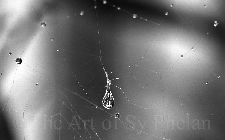 """Spider Web Rain Dops"""