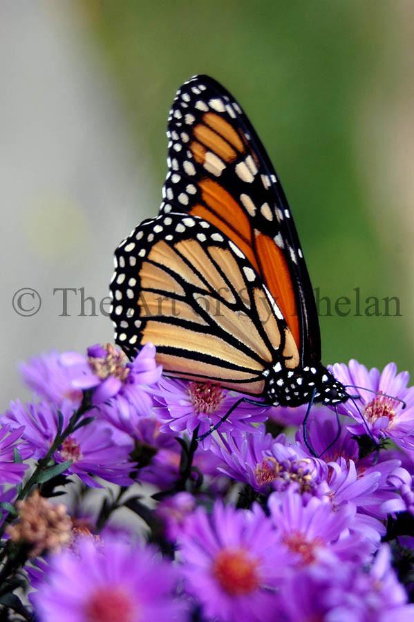"""""""Butterfly #0460"""""""