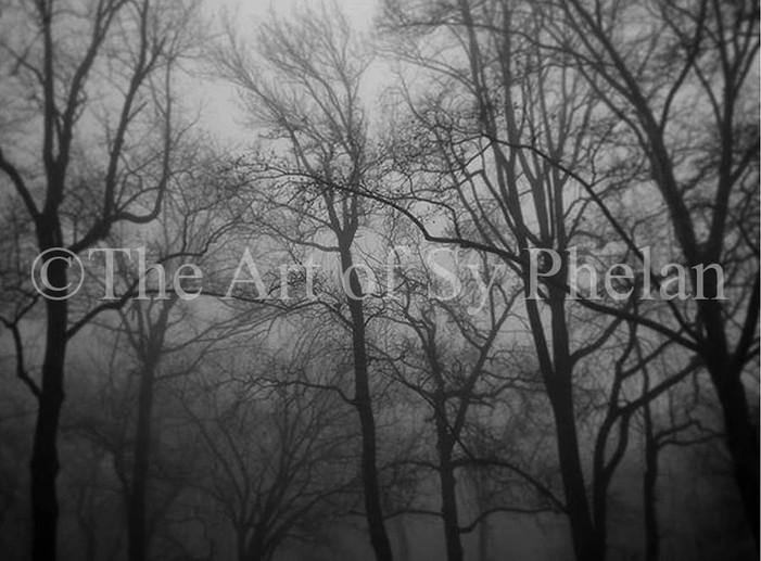 """The Secret Conversation Of Trees"""