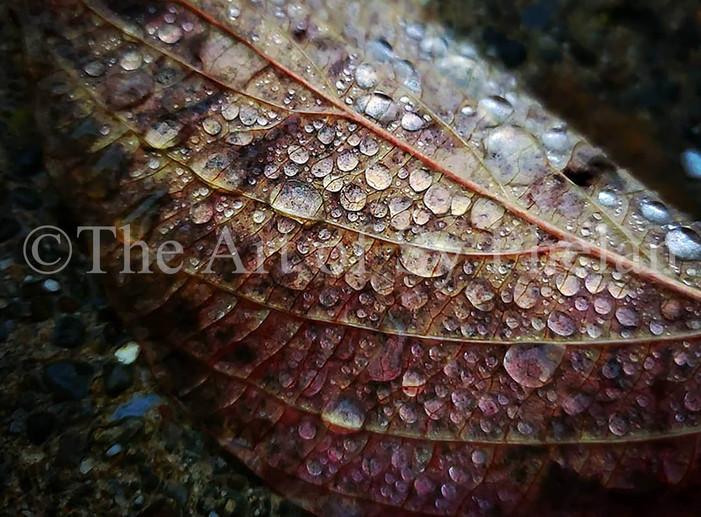 """""""Autumn Rains #1"""""""