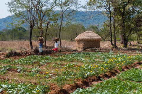 Rural Livelihood Diversification