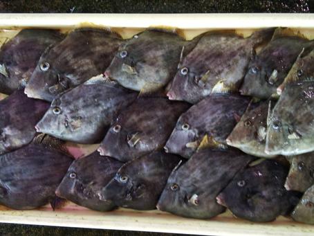 毎週土曜開催、鮮魚市情報!