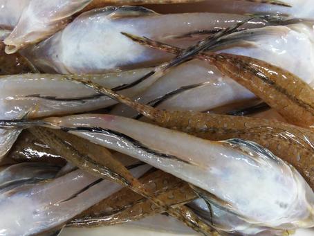 毎週土曜開催!鮮魚市情報!