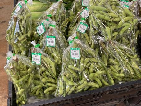 常滑産 枝付き枝豆