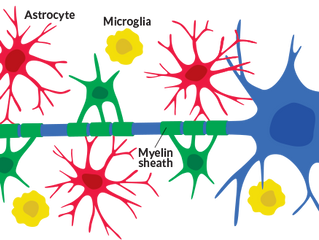 Rethinking which cells are the conductors of learning and memory