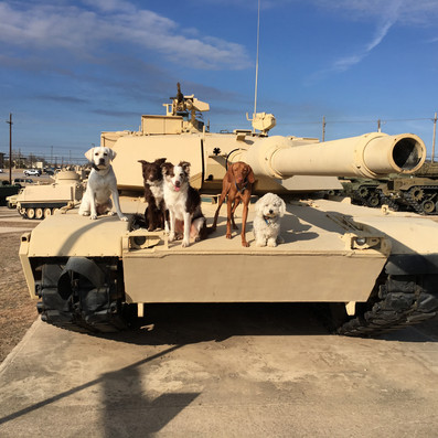 James Hamm Military Dogs