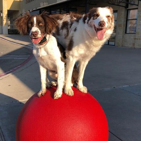 James Hamm training dogs on target ball