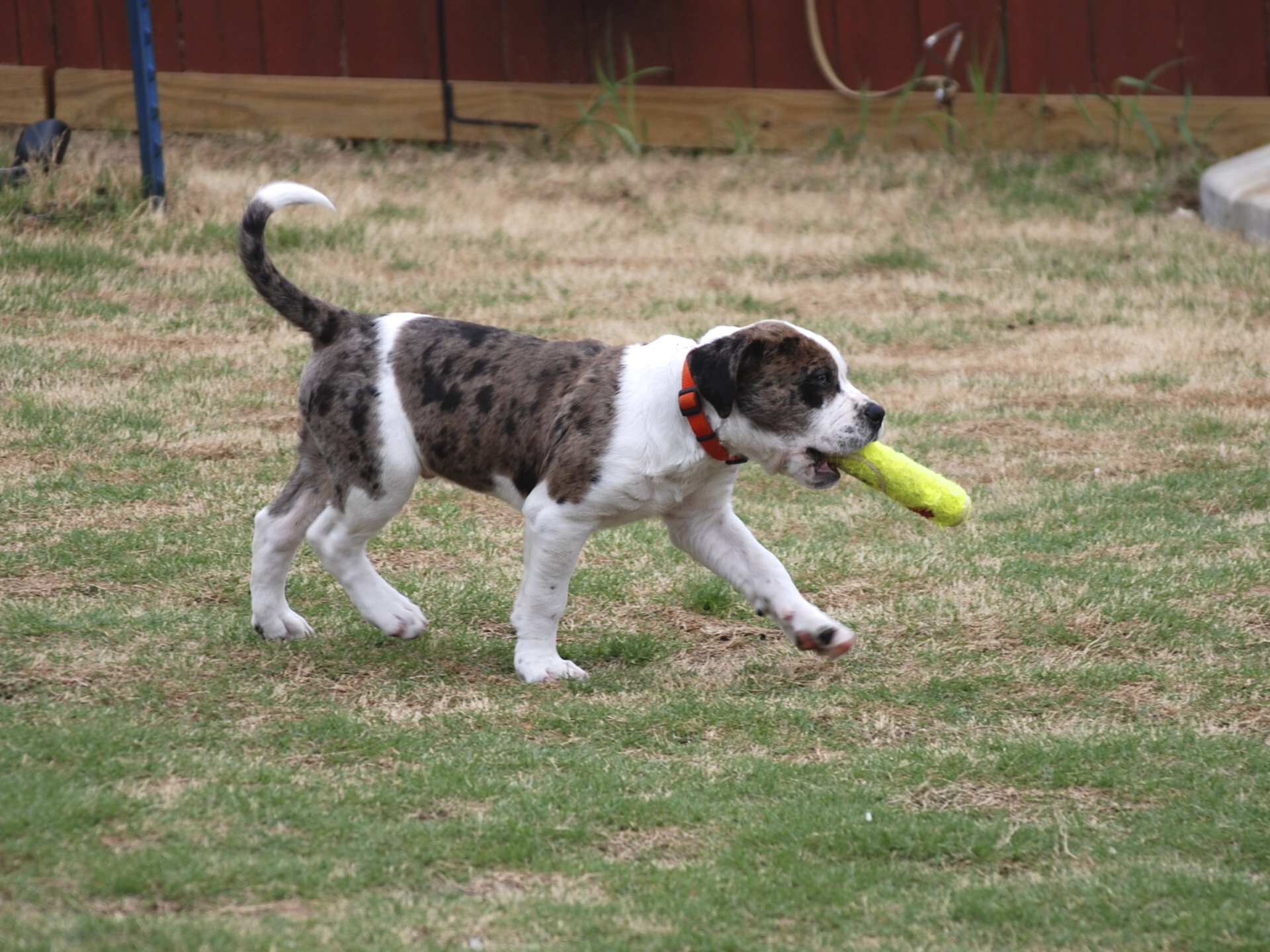 Central Texas Dog Training Killeen Texas Dog and Puppy Obedience