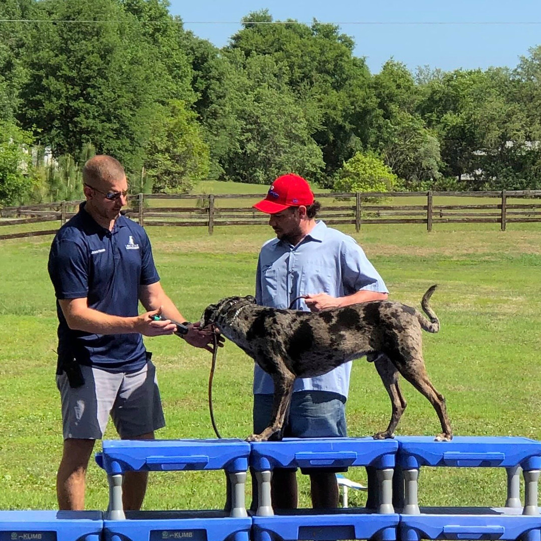 LoneStar Dog Trainer training
