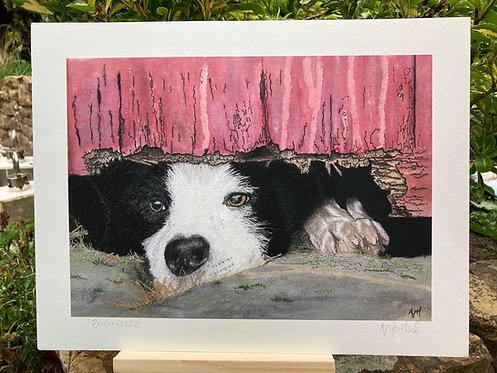 'A Dog's Life' Giclée Print