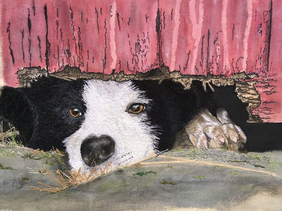 'A Dog's Life'