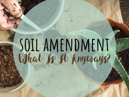 Soil Amendment: What Is It Anyways?