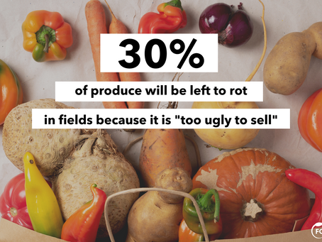 The Global Food Waste Crisis: What You Need to Know