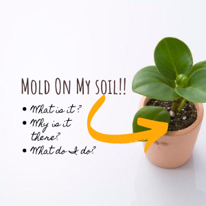 Mold On My Soil! What Is It, Why Is It There & What Do I Do?