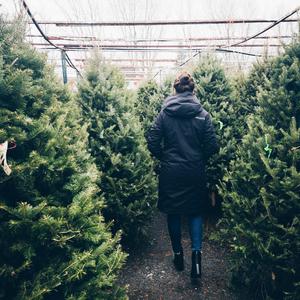zero-waste, sustainable Christmas, Christmas tree, eco-friendly