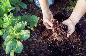 apartment composting methods, zero waste, food recycling, food waste management, gardening, vermicomposting
