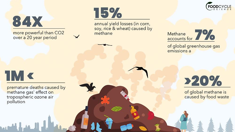 Food waste in landfill generates methane gas