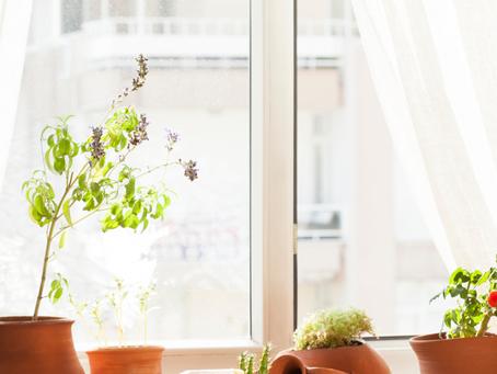 Benefits of Compost for Indoor Plants