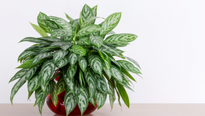 NASA's Best Air Filtering Houseplants to Purify Your Indoor Space