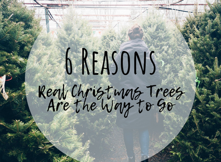 6 Reasons Real Christmas Trees Are The Way To Go
