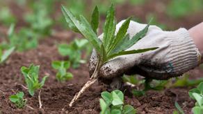 Your Essential Fall Gardening Checklist