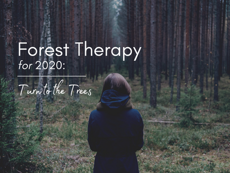 Forest Therapy for 2020 and Beyond: Turn to the Trees!