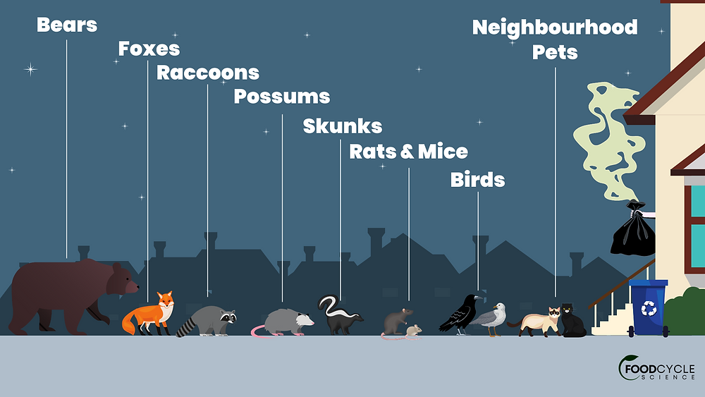 Food waste in household trash attracts pets, pests and wildlife to residential areas