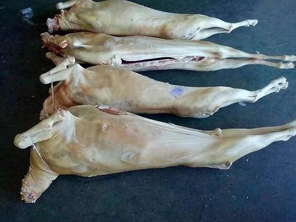 Lamb Carcass.jpg