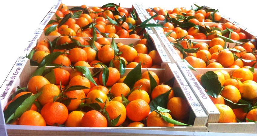 clementine corse taste.JPG